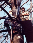 Silver Fire Treesit, 1988, Southern OR